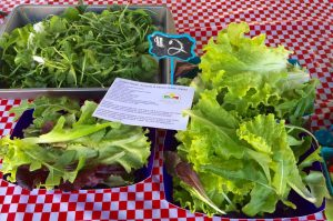 SalScilla Farms Produce - Mayflower, Arkansas 72106 - Arkansas Farm