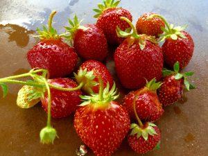 SalScilla Farms Strawberries